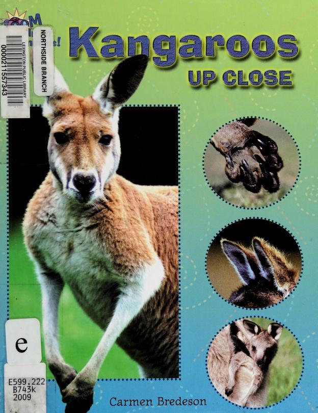 Kangaroos up close by Carmen Bredeson